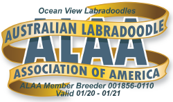 Australian Labradoodle Association of America Member Breeder