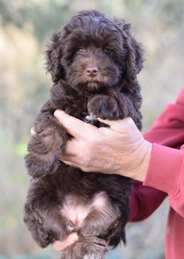 Leia 1 puppy 5 8 weeks we 4x7DSC_0025.jp